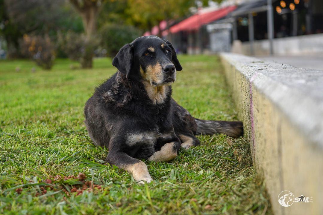 Entspantner Hund